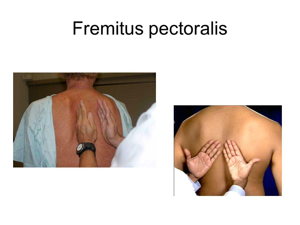 Fremitus pectoralis