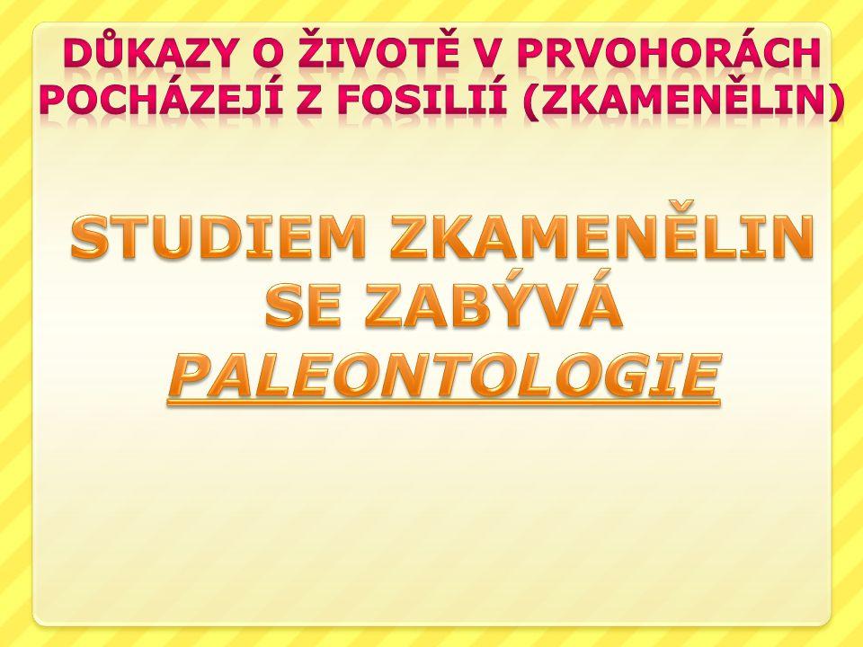 STUDIEM ZKAMENĚLIN SE ZABÝVÁ PALEONTOLOGIE