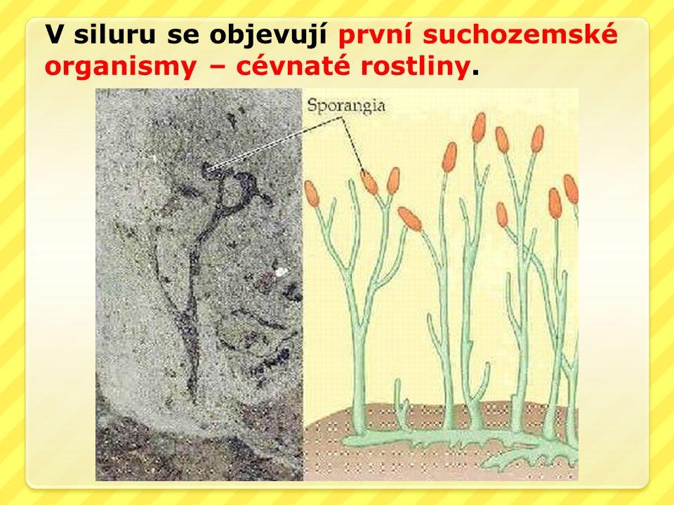 V siluru se objevují první suchozemské organismy – cévnaté rostliny.