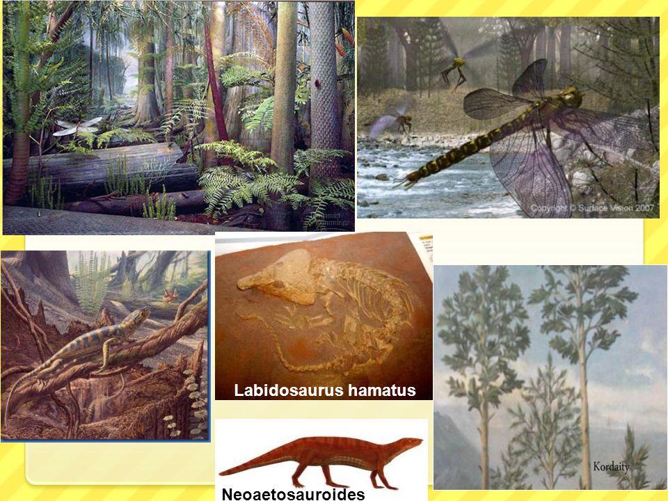Labidosaurus hamatus Neoaetosauroides