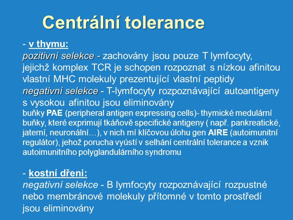Centrální tolerance v thymu: