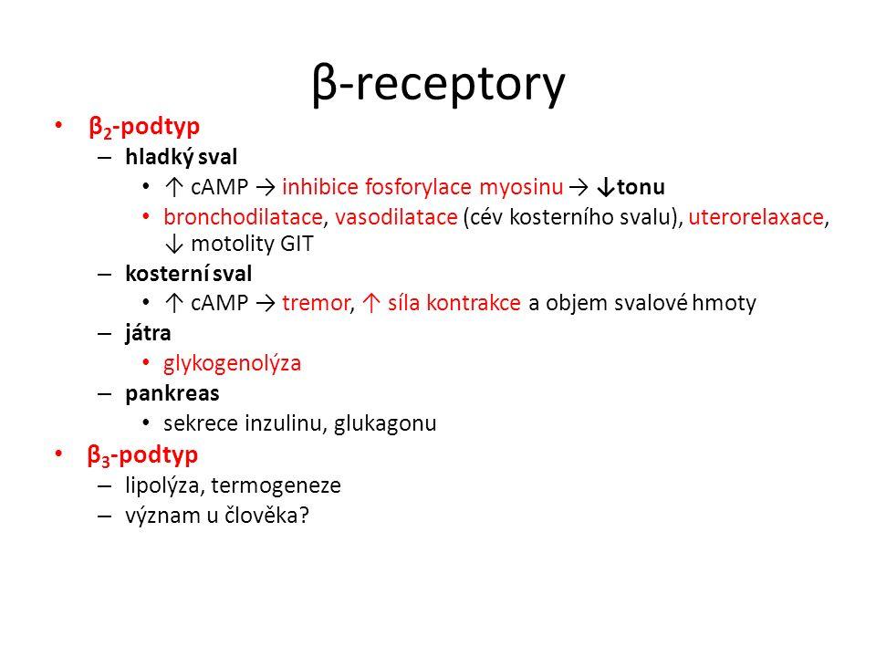 β-receptory β2-podtyp β3-podtyp hladký sval