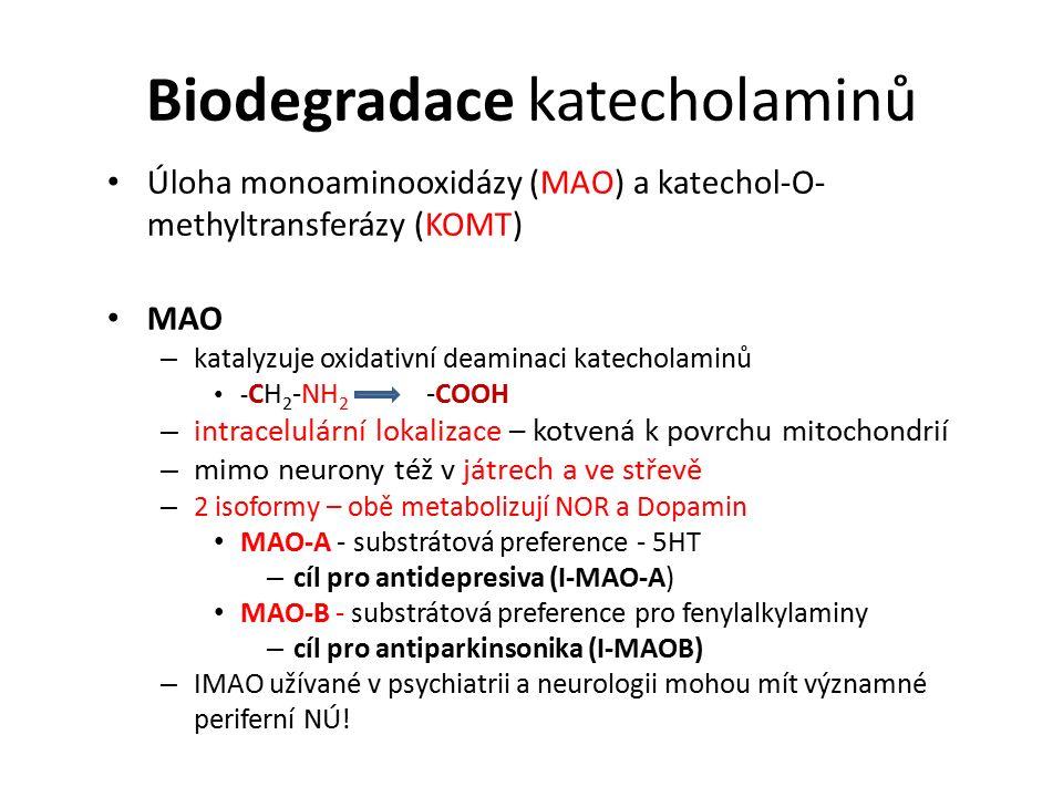 Biodegradace katecholaminů