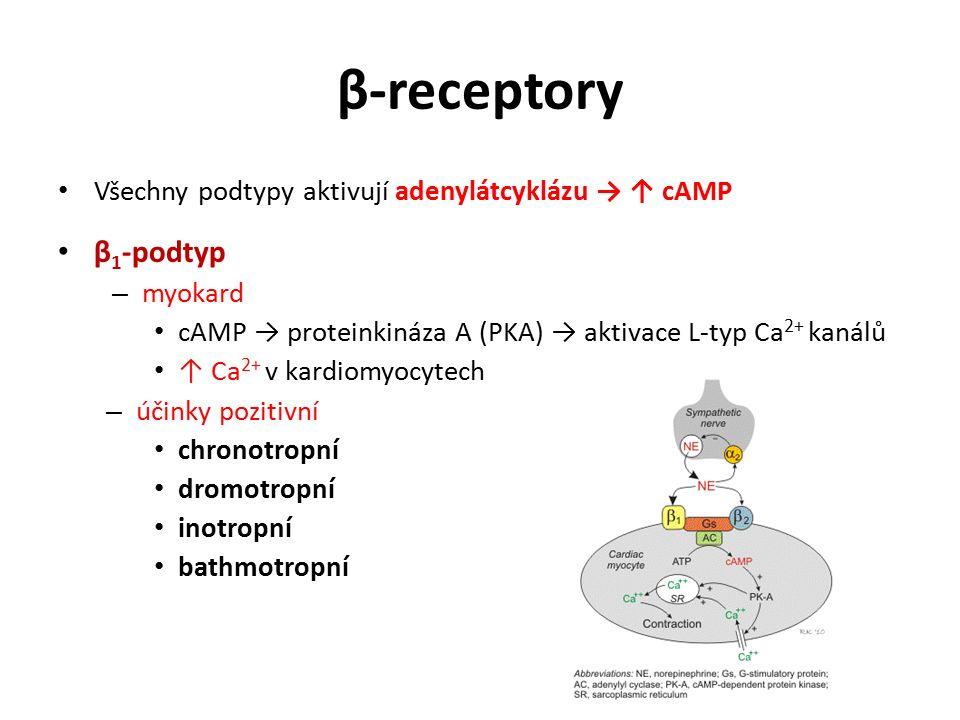β-receptory Všechny podtypy aktivují adenylátcyklázu → ↑ cAMP. β1-podtyp. myokard. cAMP → proteinkináza A (PKA) → aktivace L-typ Ca2+ kanálů.