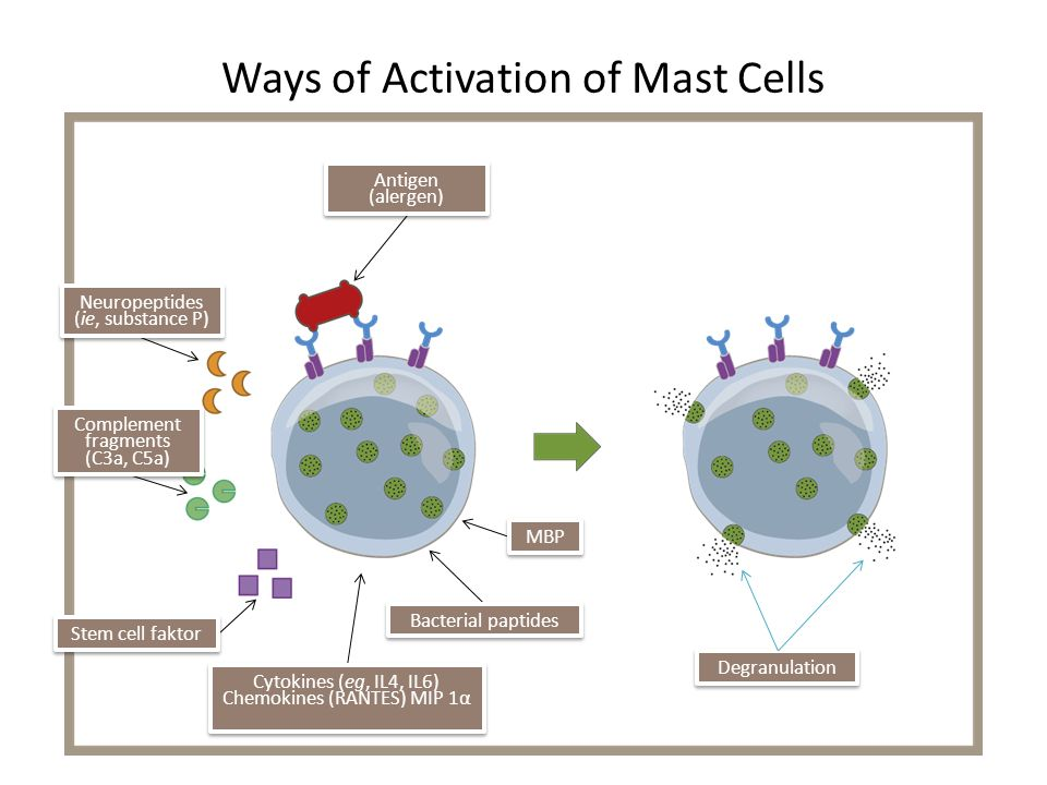 Ways of Activation of Mast Cells
