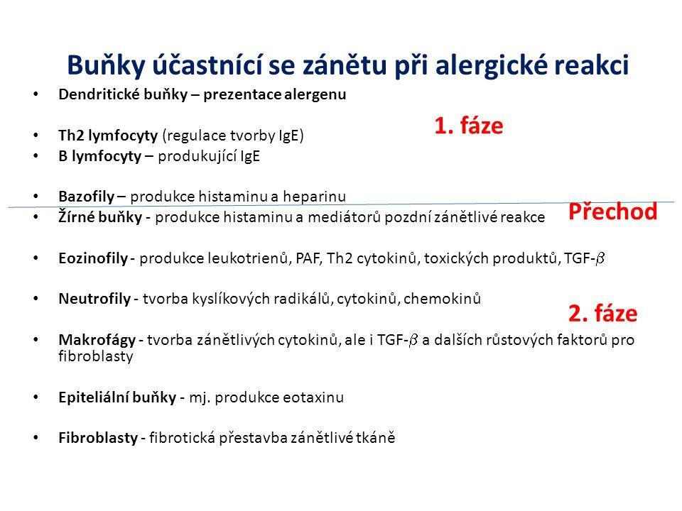 Buňky účastnící se zánětu při alergické reakci
