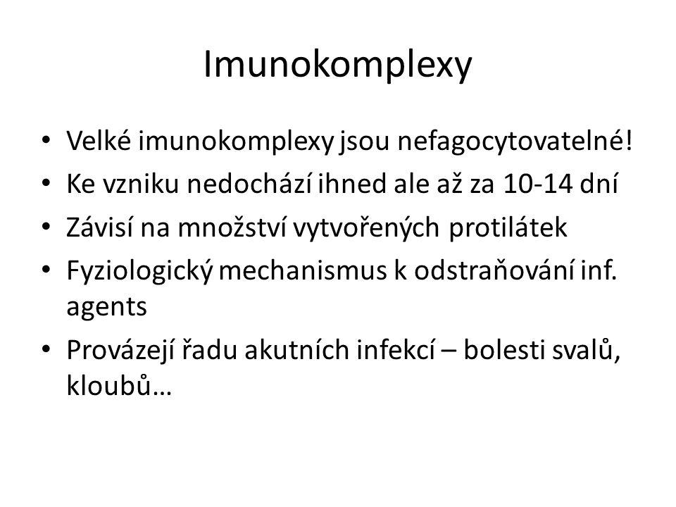Imunokomplexy Velké imunokomplexy jsou nefagocytovatelné!