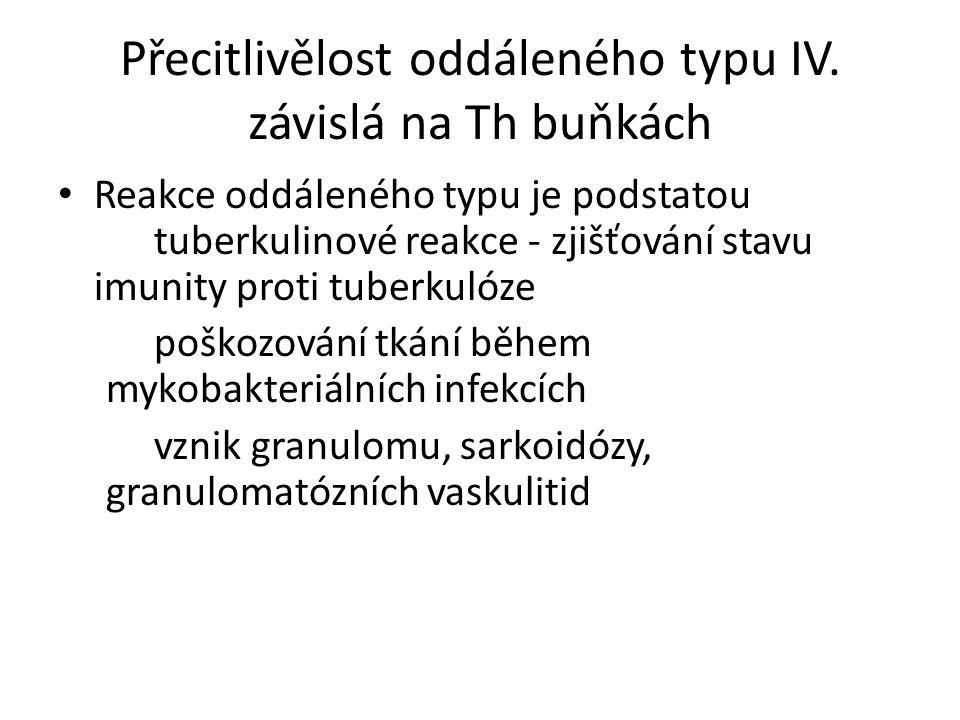 Přecitlivělost oddáleného typu IV. závislá na Th buňkách