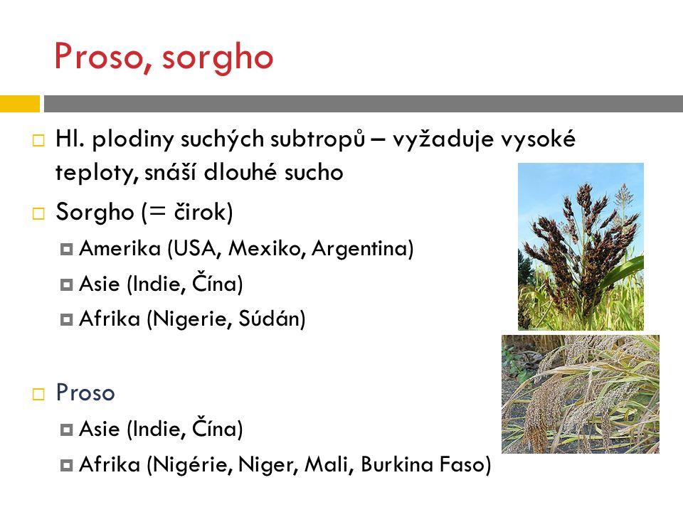Proso, sorgho Hl. plodiny suchých subtropů – vyžaduje vysoké teploty, snáší dlouhé sucho. Sorgho (= čirok)