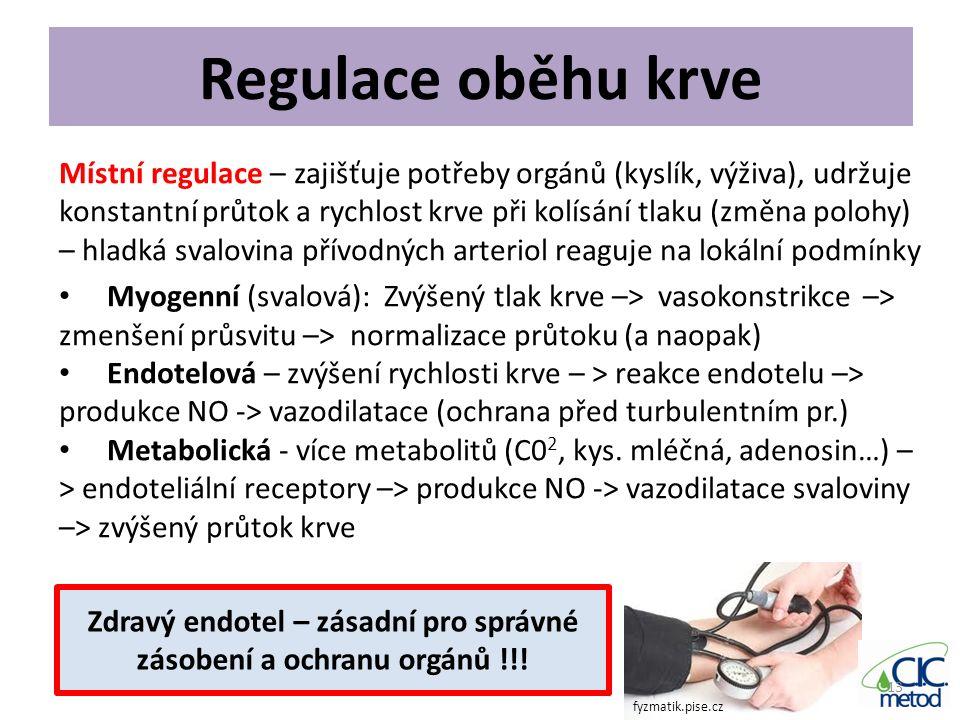 Zdravý endotel – zásadní pro správné zásobení a ochranu orgánů !!!