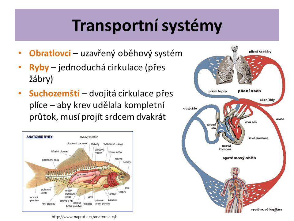 Transportní systémy Obratlovci – uzavřený oběhový systém