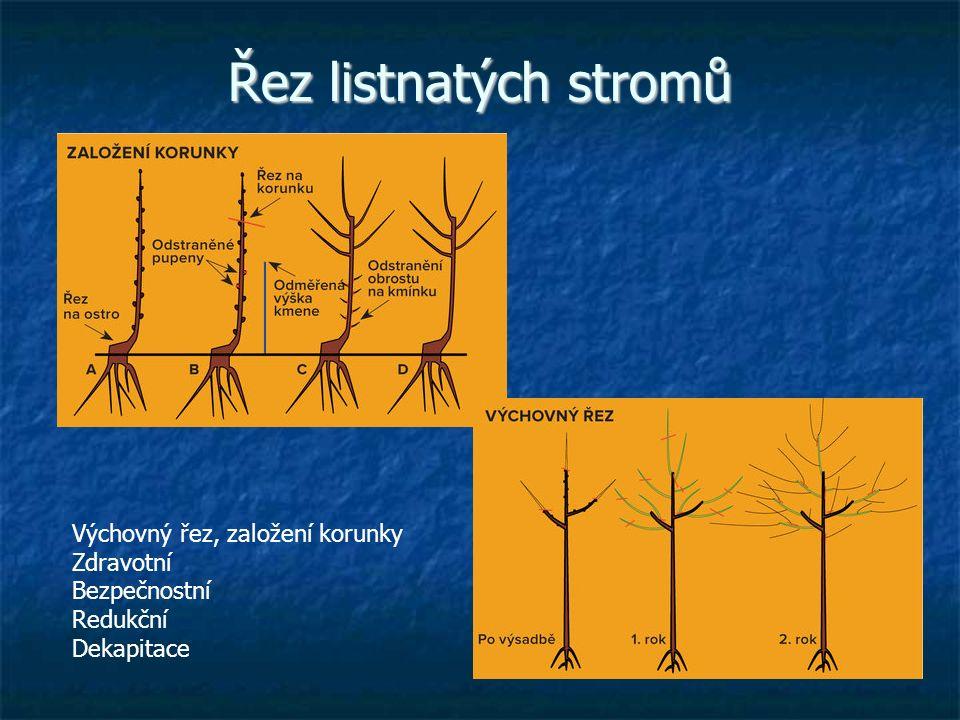 Řez listnatých stromů Výchovný řez, založení korunky Zdravotní