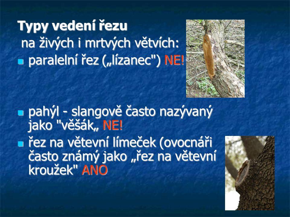 """Typy vedení řezu na živých i mrtvých větvích: paralelní řez (""""lízanec ) NE! pahýl - slangově často nazývaný jako věšák"""" NE!"""