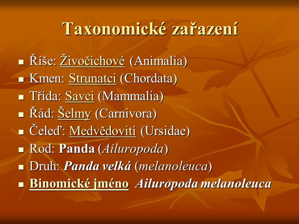 Taxonomické zařazení Říše: Živočichové (Animalia)