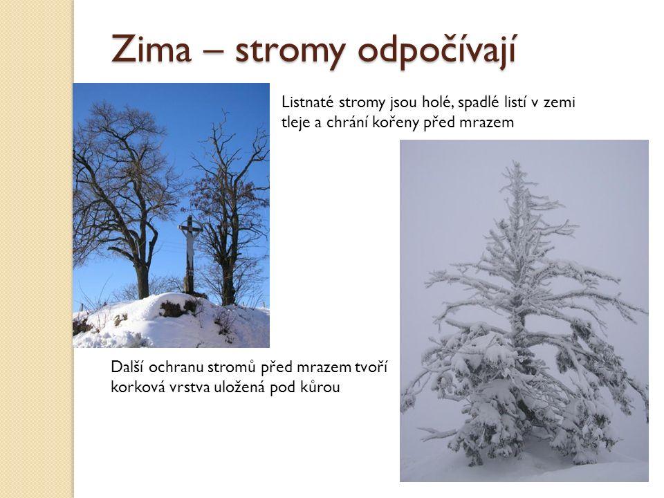 Zima – stromy odpočívají