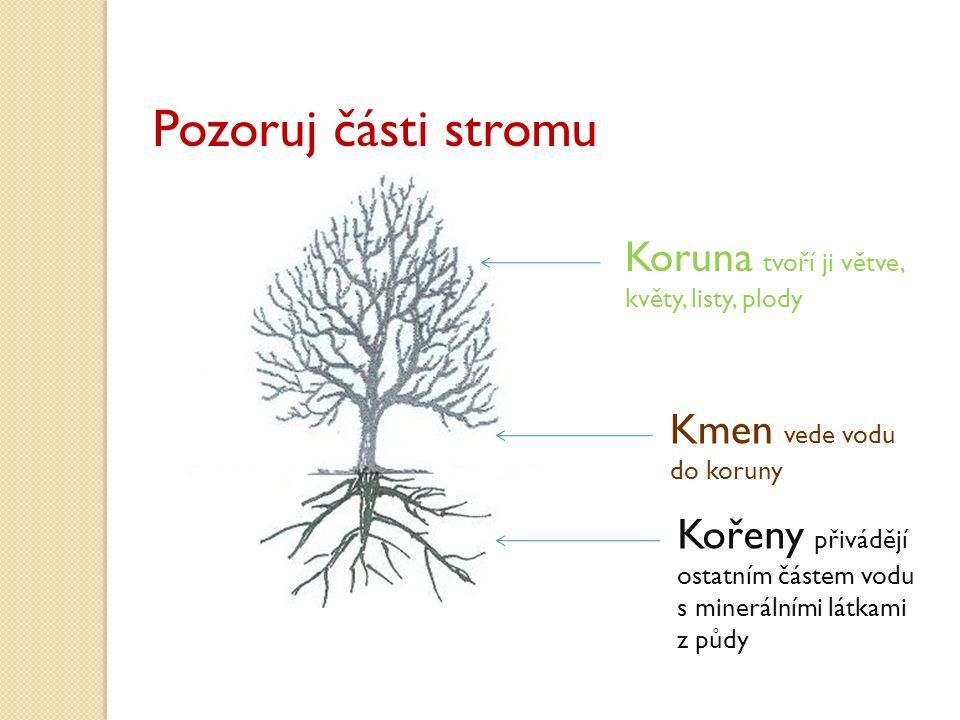 Pozoruj části stromu Koruna tvoří ji větve, Kmen vede vodu