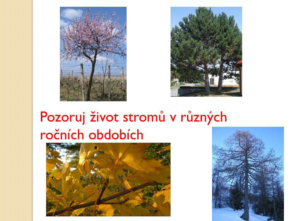 Pozoruj život stromů v různých ročních obdobích