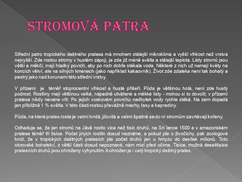 STROMOVÁ PATRA