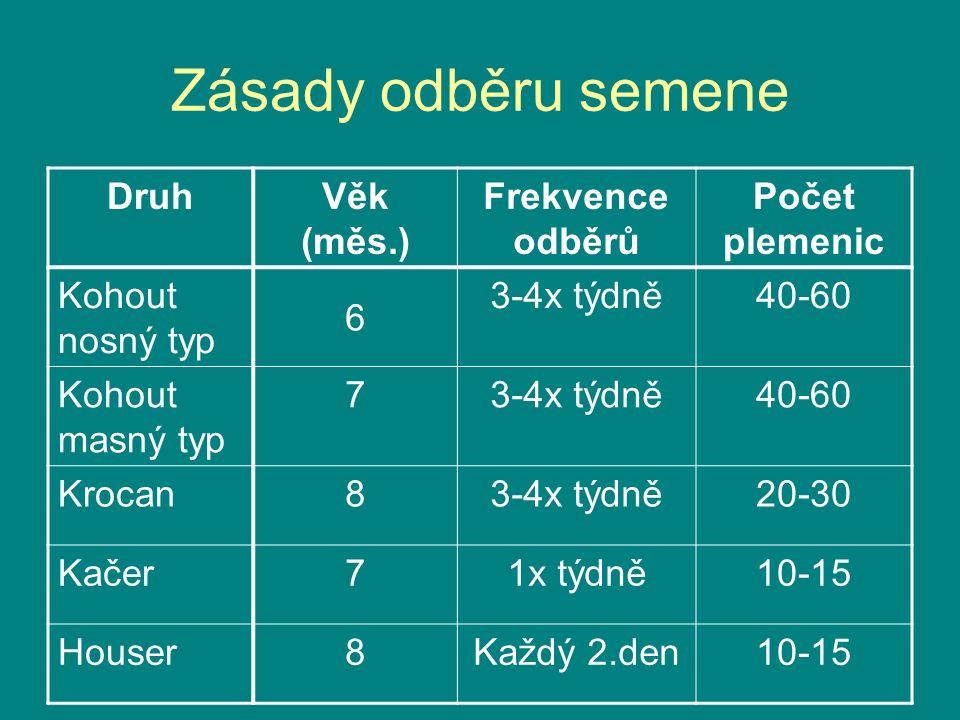 Zásady odběru semene Druh Věk (měs.) Frekvence odběrů Počet plemenic