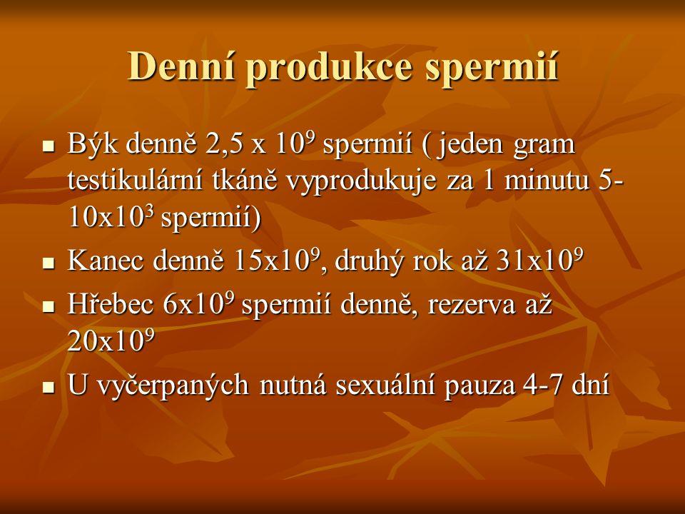 Denní produkce spermií