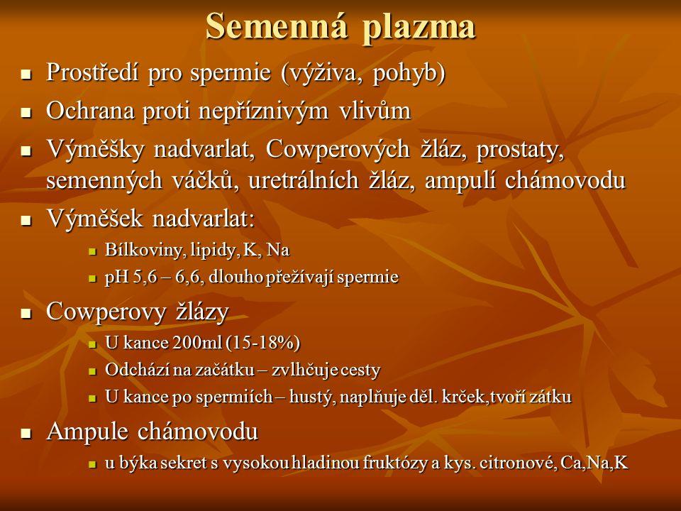 Semenná plazma Prostředí pro spermie (výživa, pohyb)