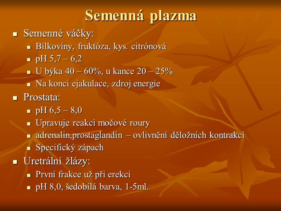 Semenná plazma Semenné váčky: Prostata: Uretrální žlázy: