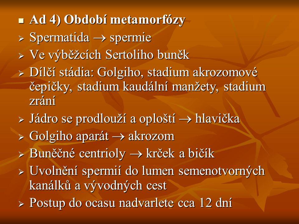 Ad 4) Období metamorfózy