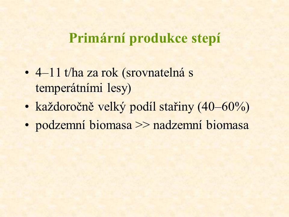 Primární produkce stepí