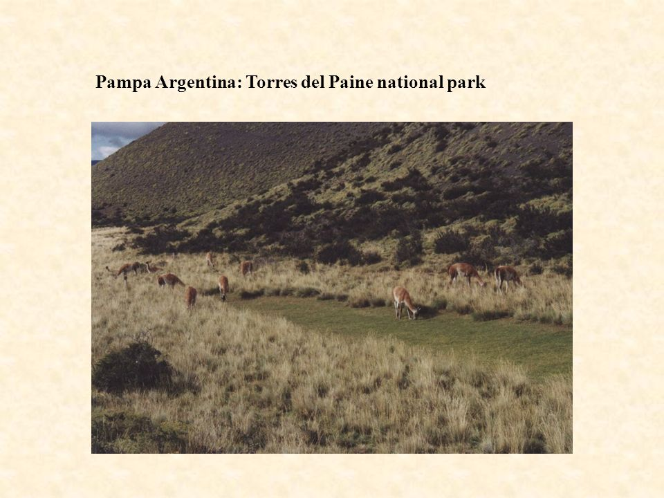 Pampa Argentina: Torres del Paine national park