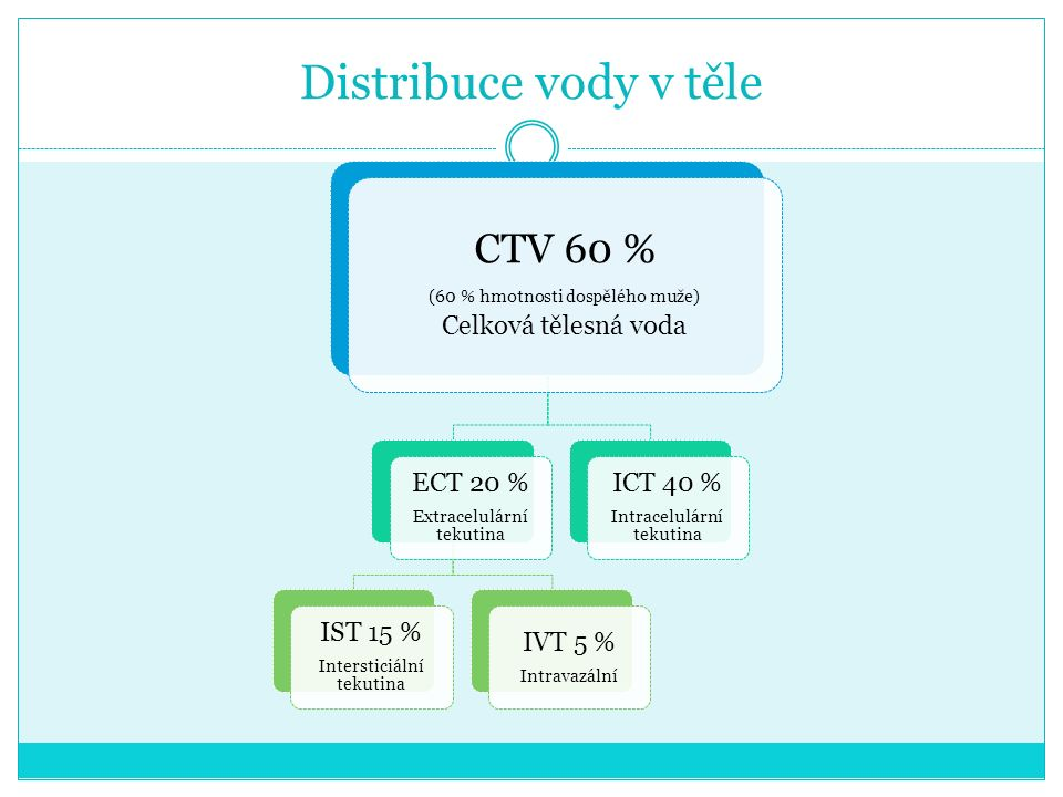 Distribuce vody v těle CTV 60 % Celková tělesná voda ECT 20 % IST 15 %