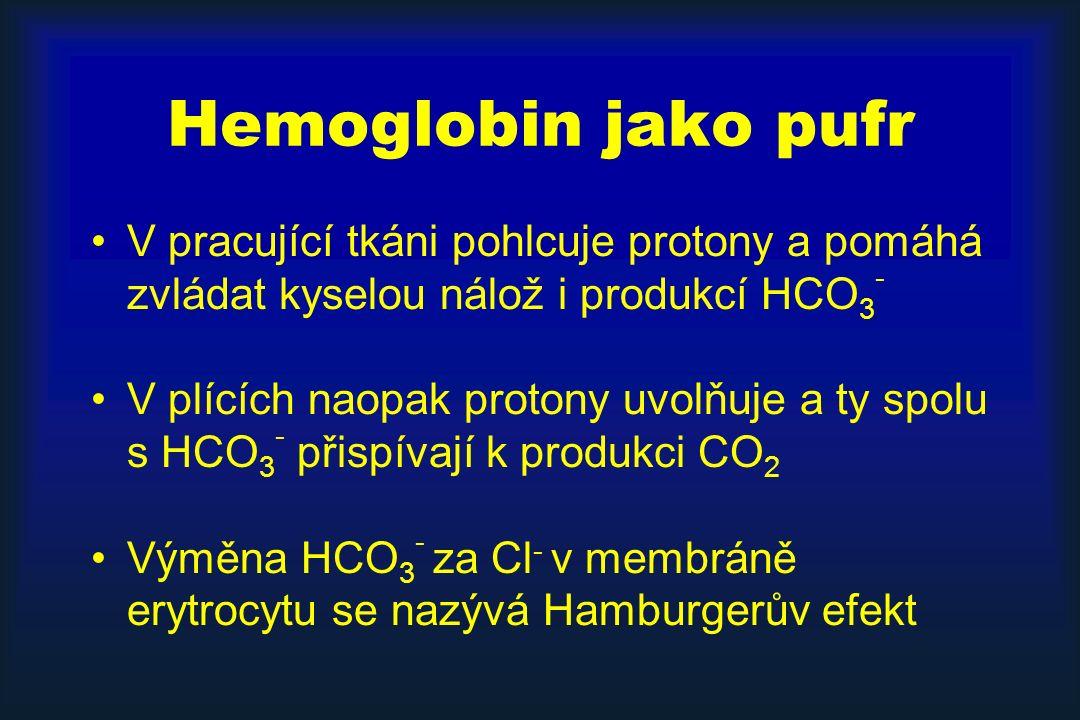 Hemoglobin jako pufr V pracující tkáni pohlcuje protony a pomáhá zvládat kyselou nálož i produkcí HCO3-