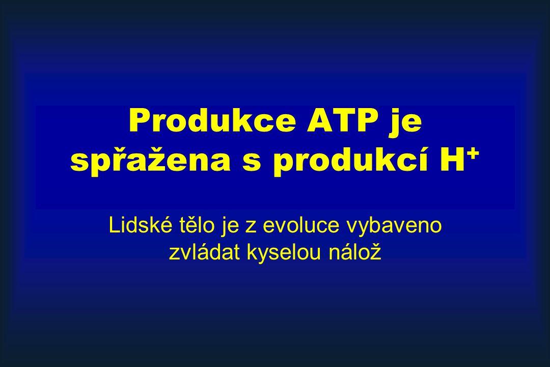 Produkce ATP je spřažena s produkcí H+
