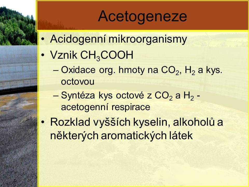 Acetogeneze Acidogenní mikroorganismy Vznik CH3COOH