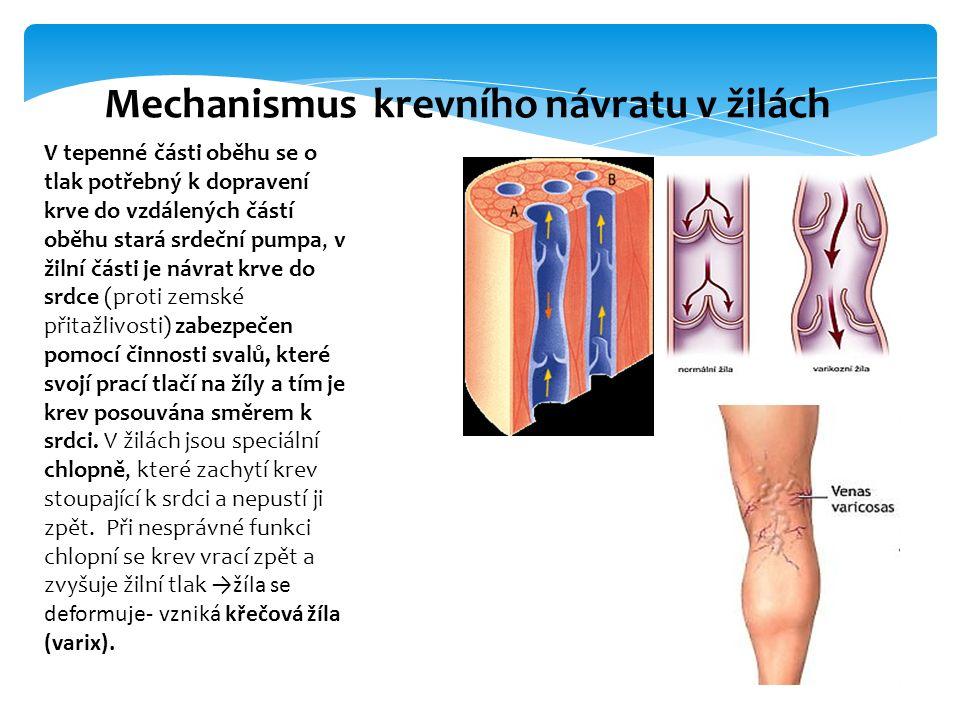 Mechanismus krevního návratu v žilách