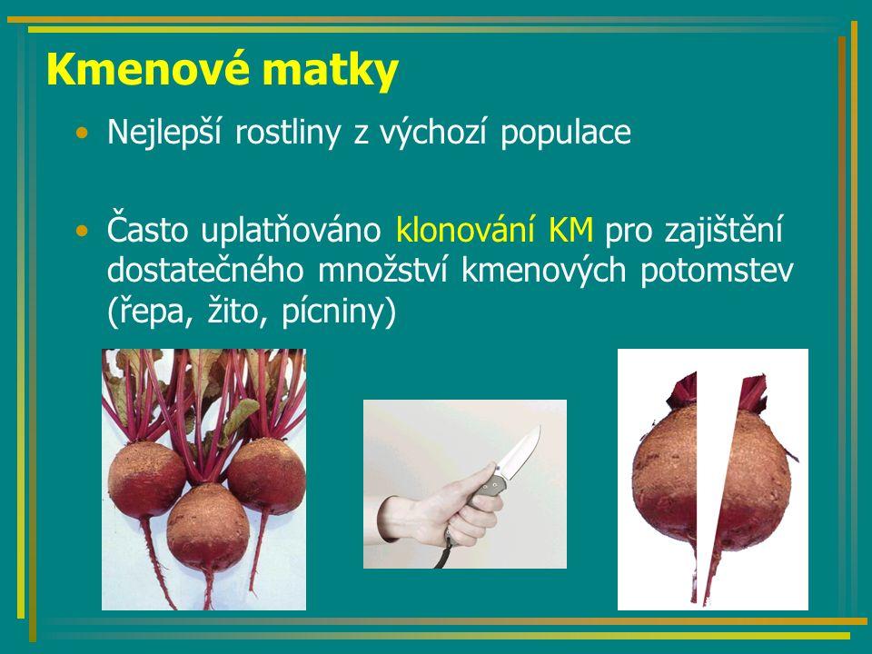 Kmenové matky Nejlepší rostliny z výchozí populace