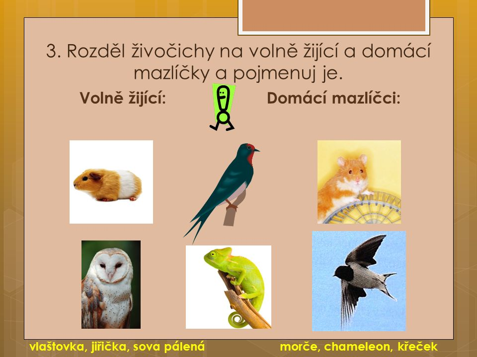 3. Rozděl živočichy na volně žijící a domácí mazlíčky a pojmenuj je.