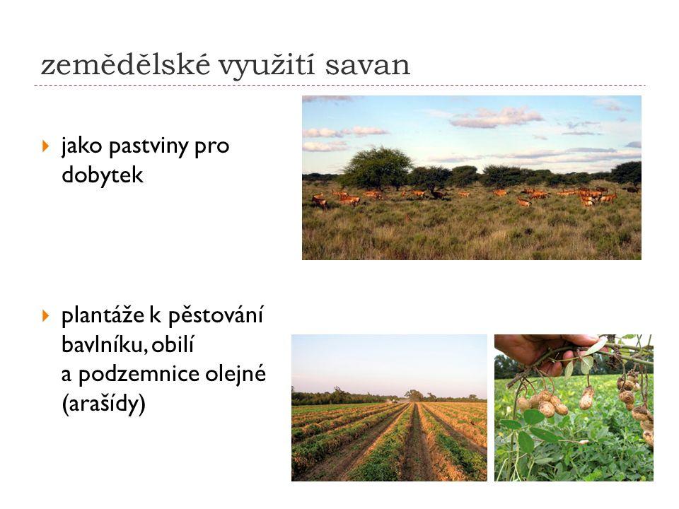 zemědělské využití savan