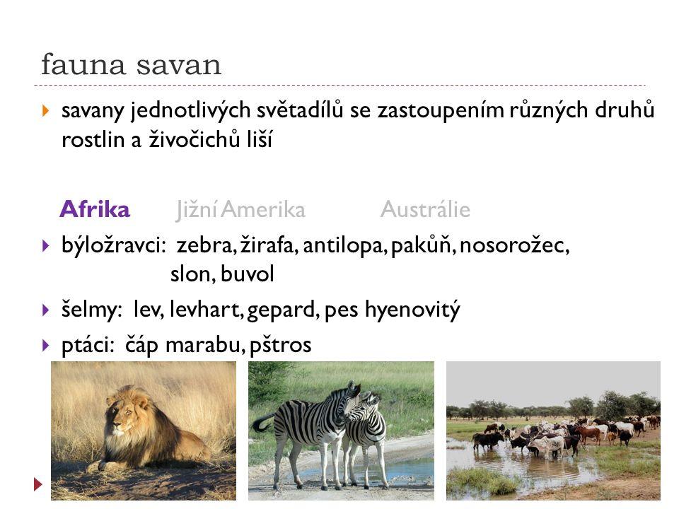 fauna savan savany jednotlivých světadílů se zastoupením různých druhů rostlin a živočichů liší. Afrika Jižní Amerika Austrálie.