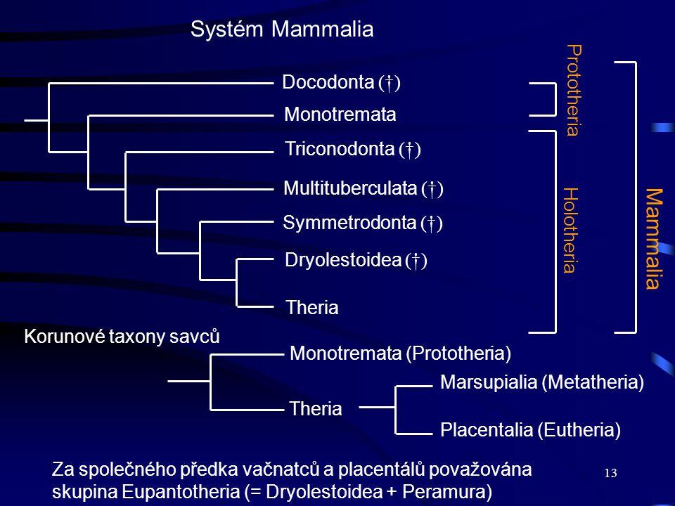 Systém Mammalia Mammalia Prototheria Docodonta (†) Monotremata