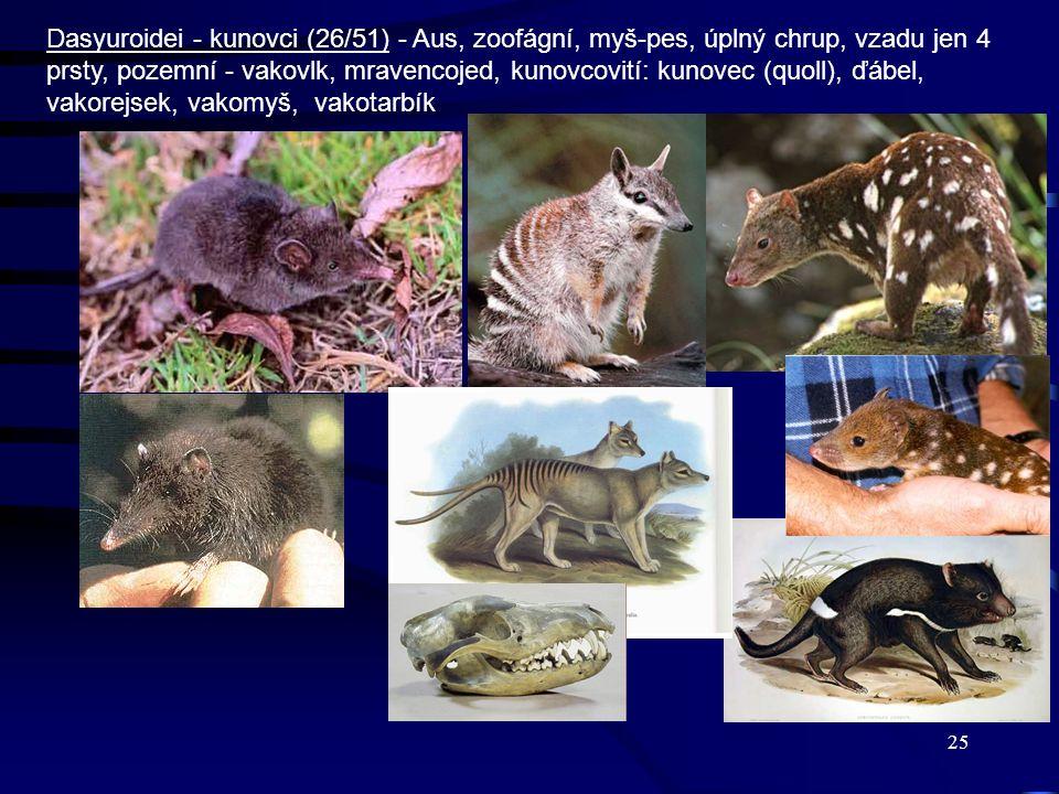 Dasyuroidei - kunovci (26/51) - Aus, zoofágní, myš-pes, úplný chrup, vzadu jen 4 prsty, pozemní - vakovlk, mravencojed, kunovcovití: kunovec (quoll), ďábel, vakorejsek, vakomyš, vakotarbík