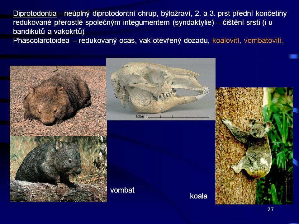 Diprotodontia - neúplný diprotodontní chrup, býložraví, 2. a 3