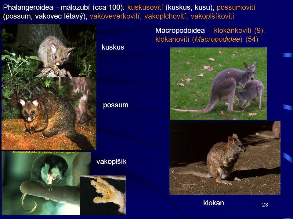 Phalangeroidea - málozubí (cca 100): kuskusovití (kuskus, kusu), possumovití (possum, vakovec létavý), vakoveverkovití, vakoplchovití, vakoplšíkovití