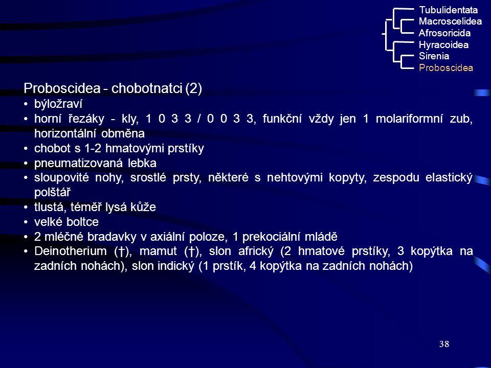 Proboscidea - chobotnatci (2)