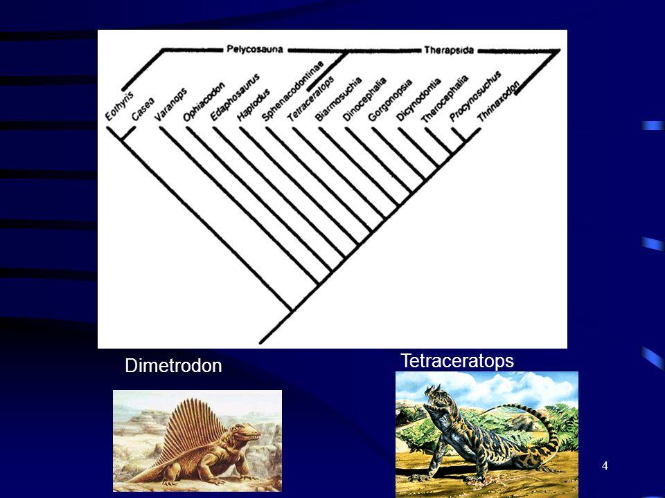Tetraceratops Dimetrodon