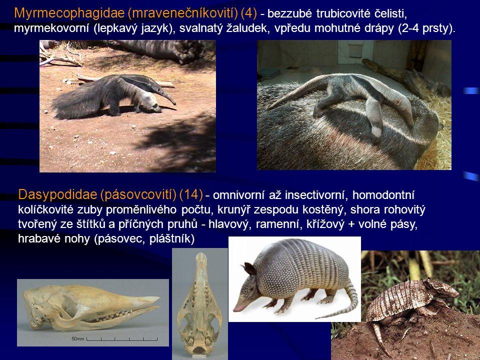 Myrmecophagidae (mravenečníkovití) (4) - bezzubé trubicovité čelisti, myrmekovorní (lepkavý jazyk), svalnatý žaludek, vpředu mohutné drápy (2-4 prsty).