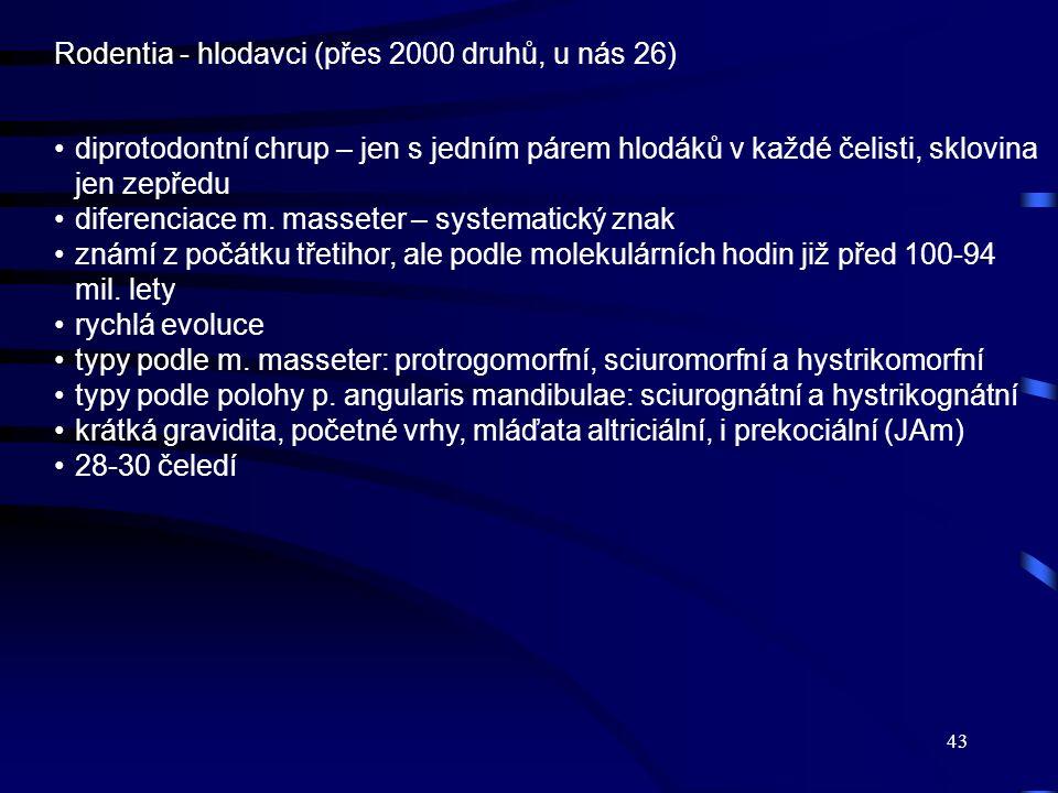 Rodentia - hlodavci (přes 2000 druhů, u nás 26)