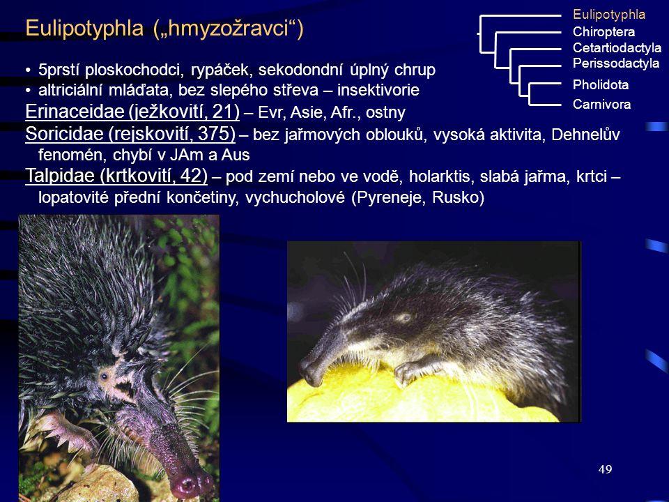 """Eulipotyphla (""""hmyzožravci )"""