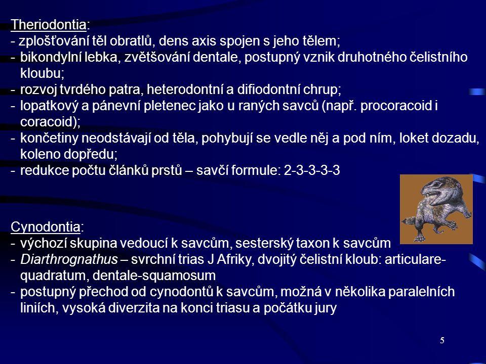 Theriodontia: - zplošťování těl obratlů, dens axis spojen s jeho tělem;