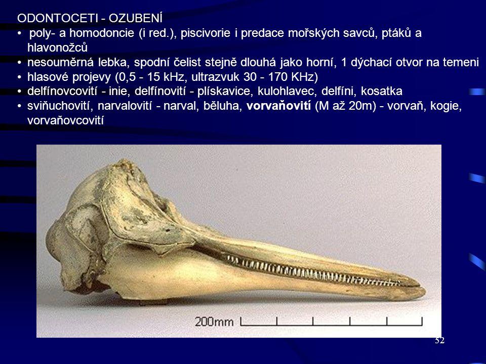 ODONTOCETI - OZUBENÍ poly- a homodoncie (i red.), piscivorie i predace mořských savců, ptáků a hlavonožců.