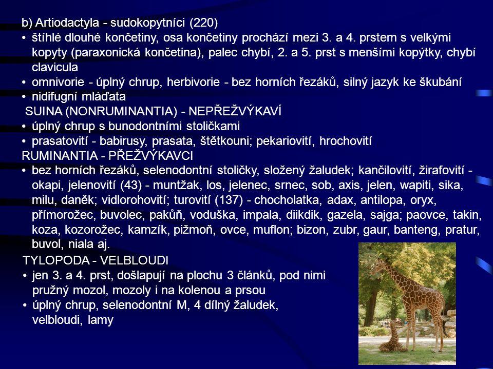 b) Artiodactyla - sudokopytníci (220)